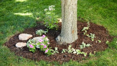 Photo of Three Steps to Determine if Your Garden Trees Are Healthy
