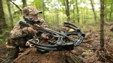 Photo of An Insight Into The Crossbows Bows