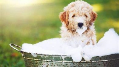 Photo of How to Bathe a Stubborn Pup