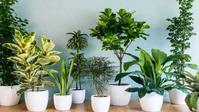Photo of Indoor Plants: The Health Benefits