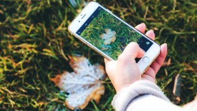 Photo of Best Mobile Apps to Identify Plants