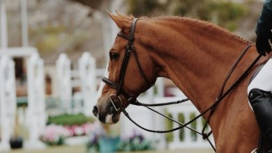 Photo of 4 Factors That Contribute To A Racehorses Retirement