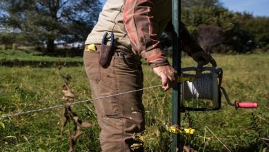 Photo of Know How Much Electric Fencing May Cost With Installation