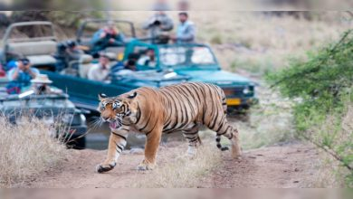 Photo of Ranthambore National Park Complete Travel Guide